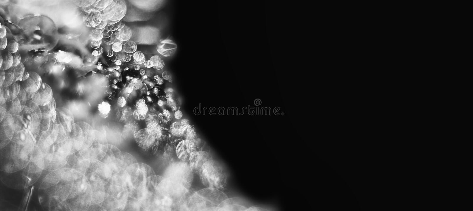Luxury abstract black and white background. For weddings or celebrations. Banner with copy space royalty free stock image