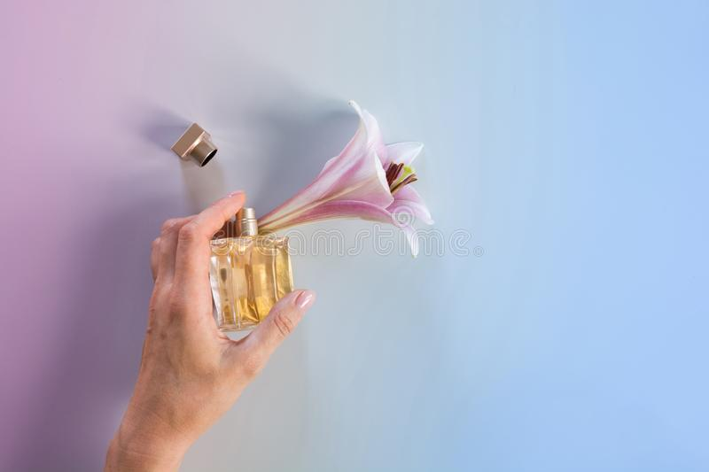 Luxury bottle of perfume in female hand with fresh lily flowers on blue background royalty free stock photography