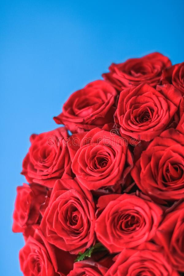 Luxury bouquet of red roses on blue background, flowers as a holiday gift royalty free stock image