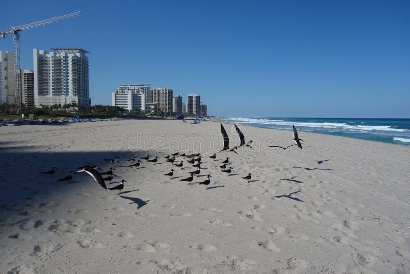 Luxury condominiums at Singer Island, Florida stock photos