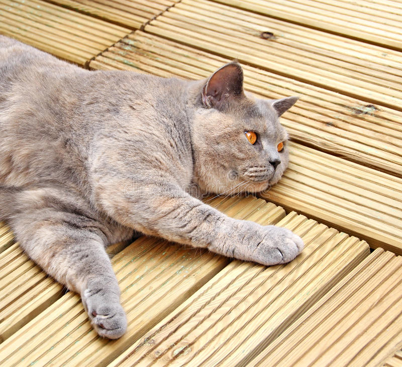Luxury decking cat stock image