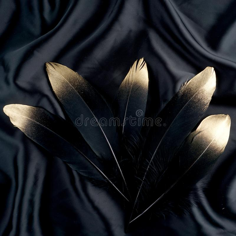 Luxury gilded gold golden black swan feather on silk cloth background royalty free stock photography