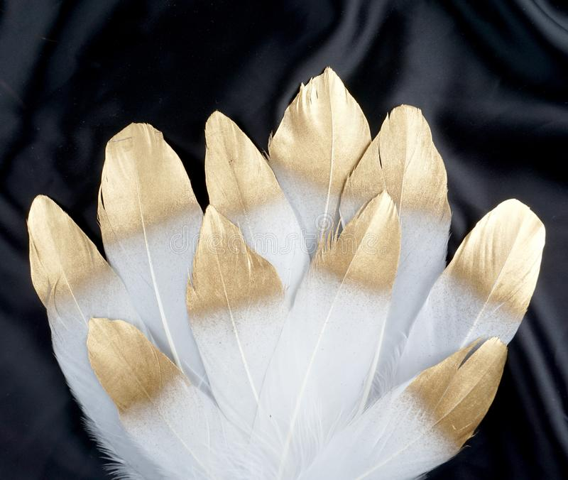 Luxury gilded gold golden white swan feather on black silk cloth background royalty free stock images