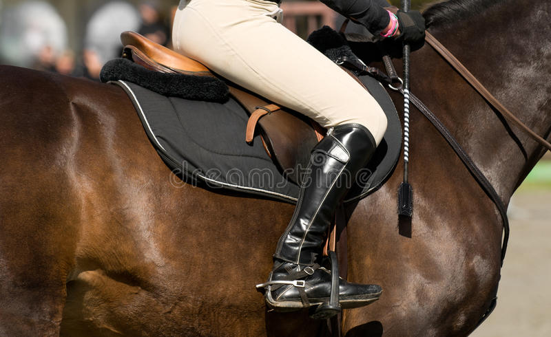 Download Luxury horseman detail stock photo. Image of competition - 20645176
