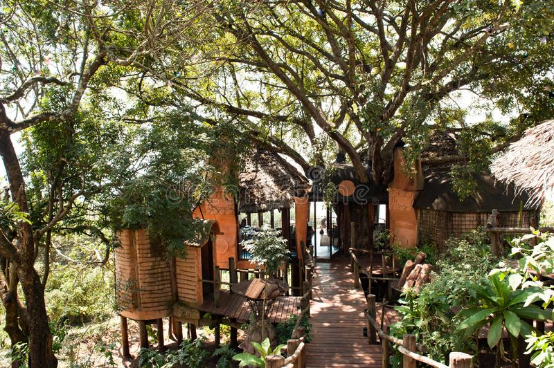 Way through trees to Ngorongoro Crater Lodge, Tanzania, Africa. Ecological concept. stock photography