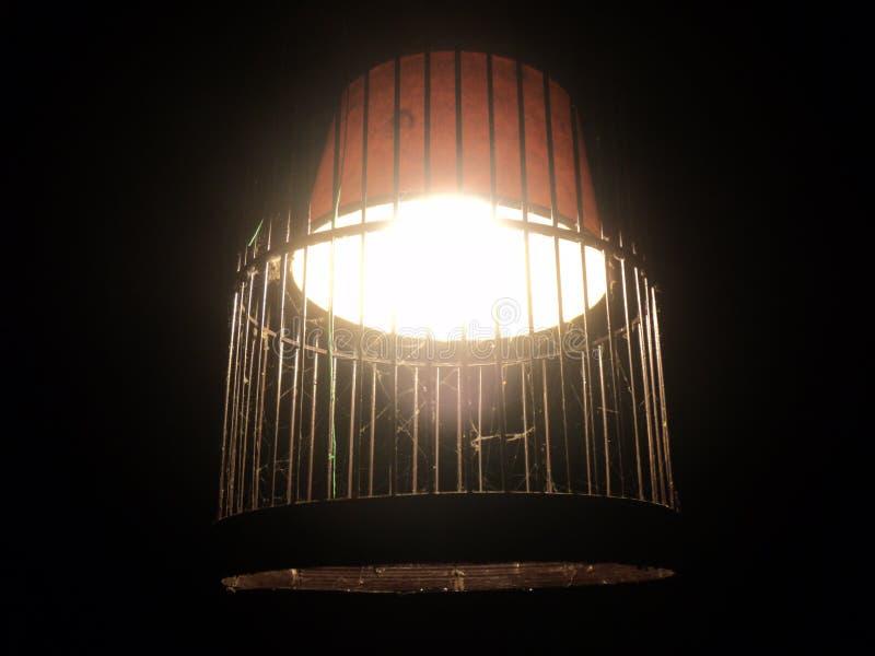 luz ámbar con el bambú fotografía de archivo libre de regalías