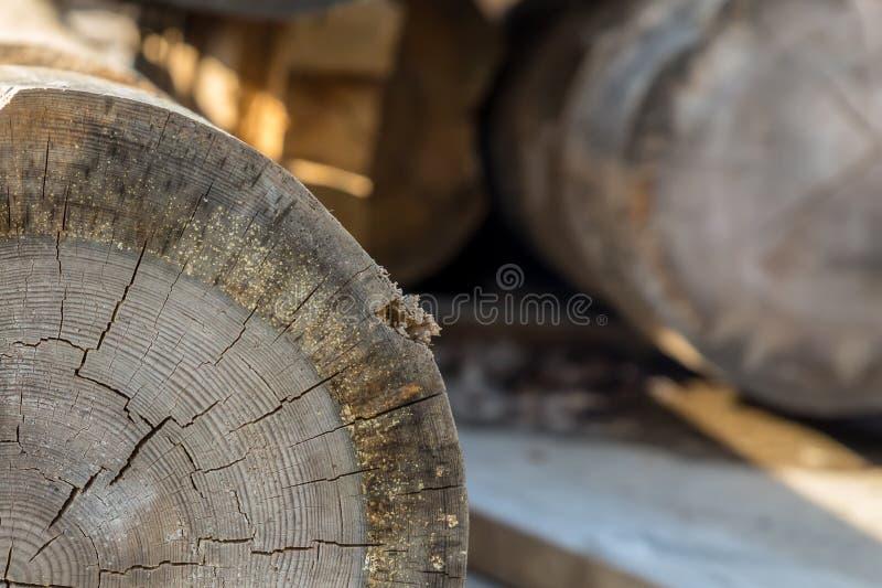 Luz abatida velha do feixe - o anel anual cinzento rachou a peça de madeira da serração do close-up do tronco imagem de stock