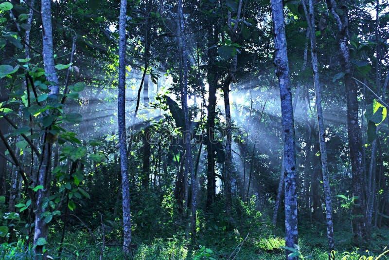 Luz alta na manhã imagem de stock royalty free