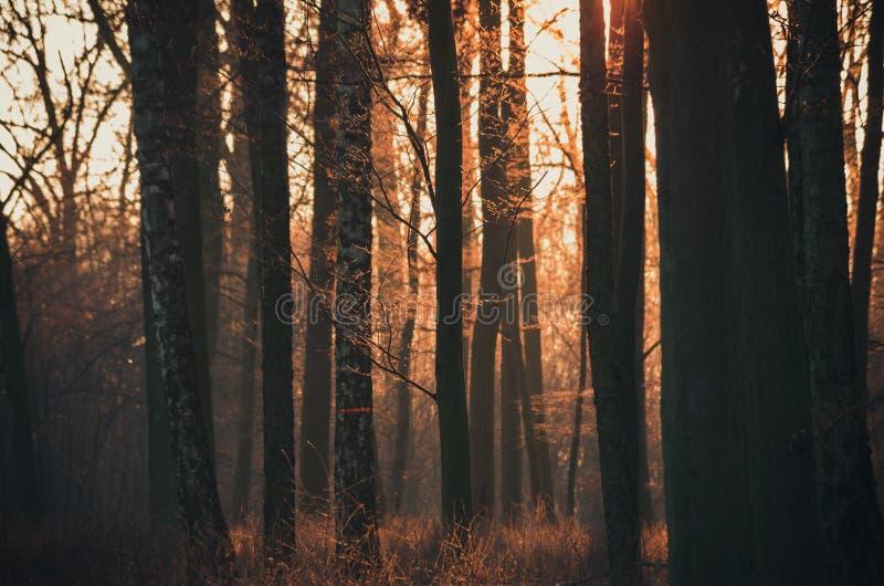 Luz anaranjada del sol poniente en un bosque del otoño imagenes de archivo