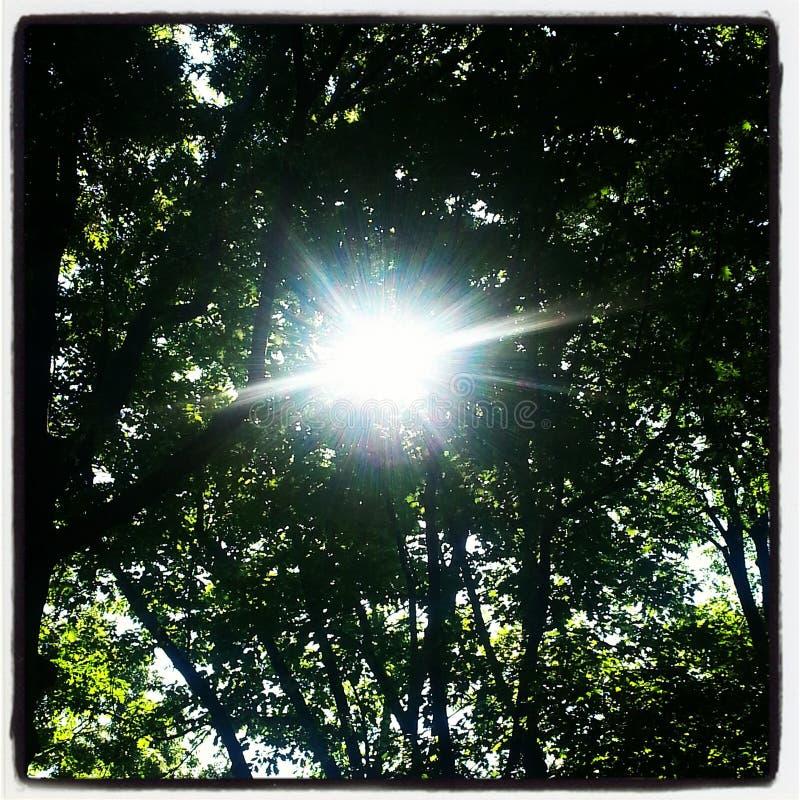 Luz antes das árvores leemie fotos de stock