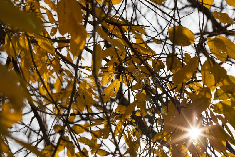 Luz asoleada fotografía de archivo libre de regalías