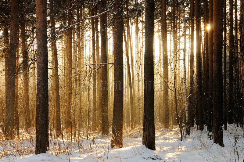 Luz através das árvores foto de stock