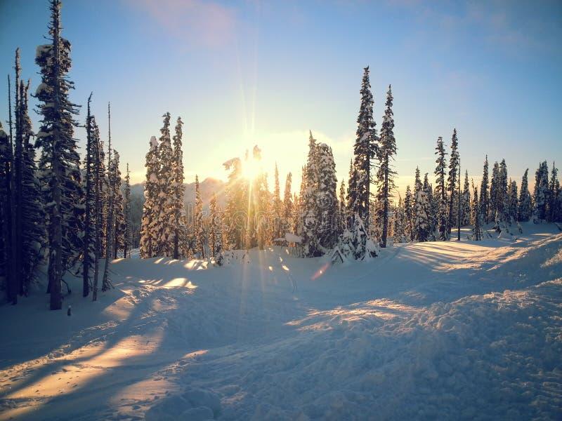 A luz através das árvores fotos de stock royalty free