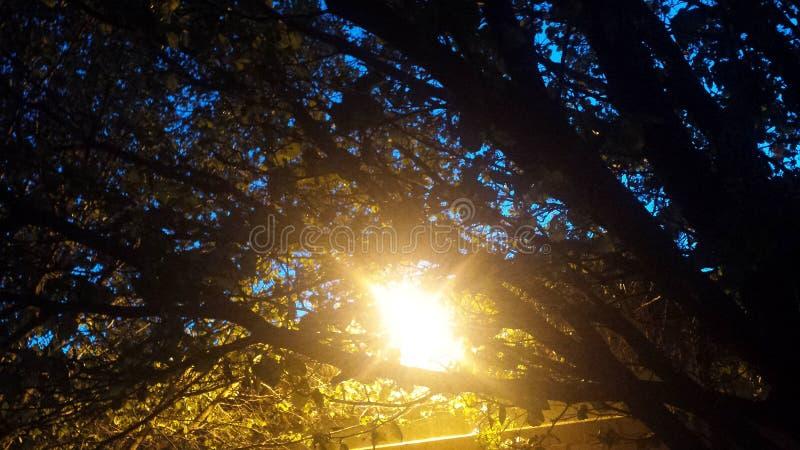 Luz através das árvores fotos de stock royalty free