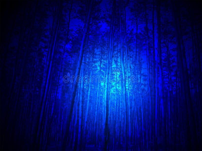 Luz azul mágica na floresta, noite, fotografia de stock royalty free