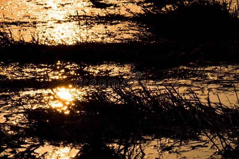 A luz bate a água, por do sol na noite imagem de stock