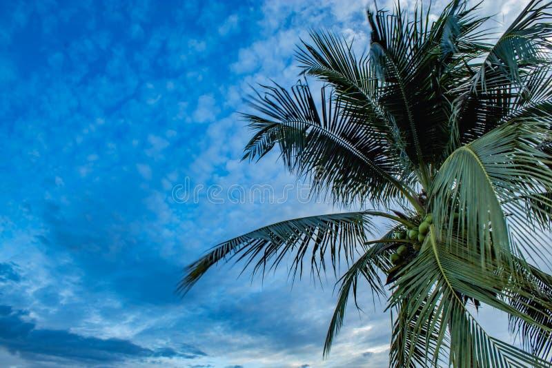 Luz bonita do por do sol atrás das árvores de coco fotografia de stock royalty free
