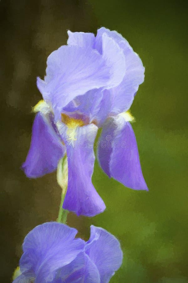 Luz branca e roxo m?dio Iris Blossom farpada alta imagens de stock