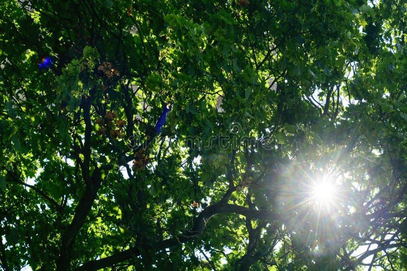 Luz brilhante da luz solar nas folhas de madeira verdes imagem de stock