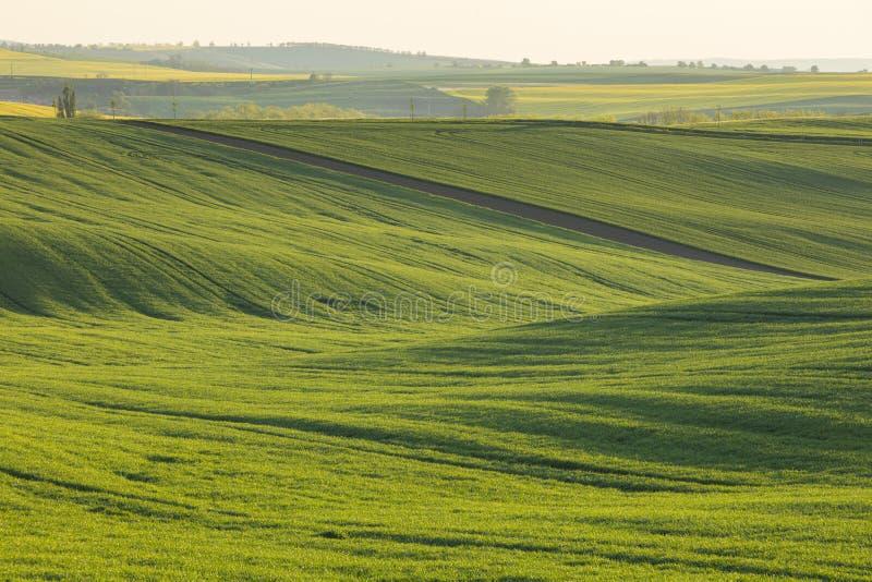Luz caliente de la tarde en campo verde foto de archivo libre de regalías