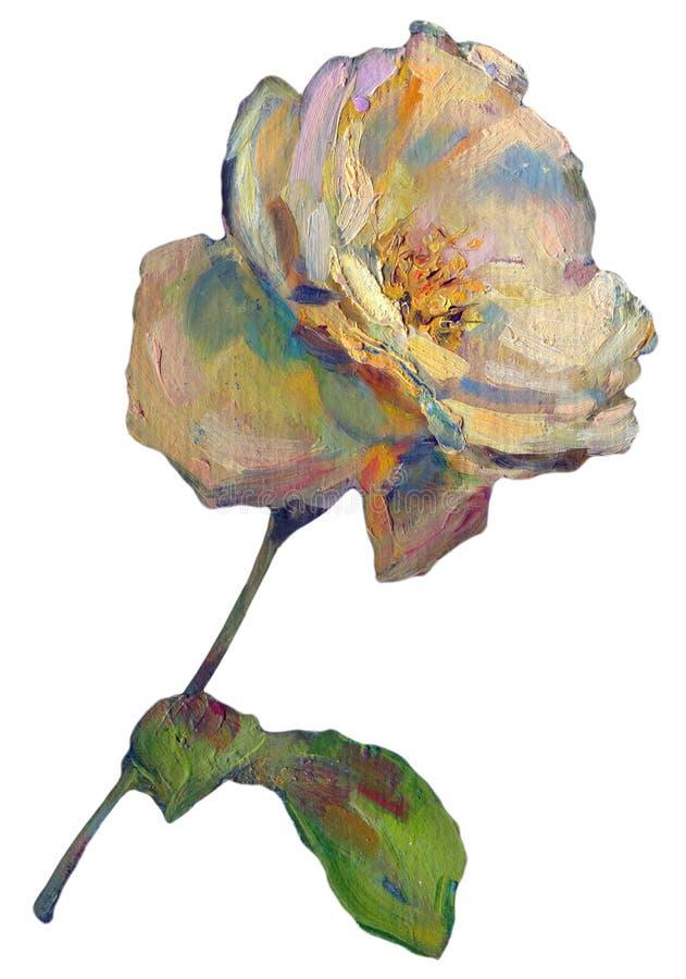 Luz colorida bonita - Rose Flower alaranjada amarela no fundo branco Ilustração da pintura a óleo ilustração stock