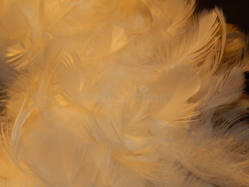 Luz como pluma foto de archivo