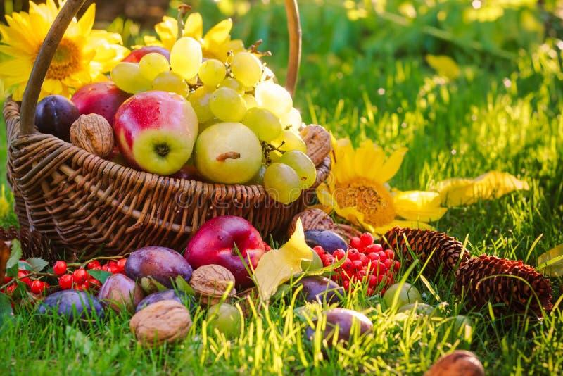 Download Luz Completa De La Puesta Del Sol De La Hierba De Las Frutas De La Cesta Foto de archivo - Imagen de pera, jugoso: 44854168