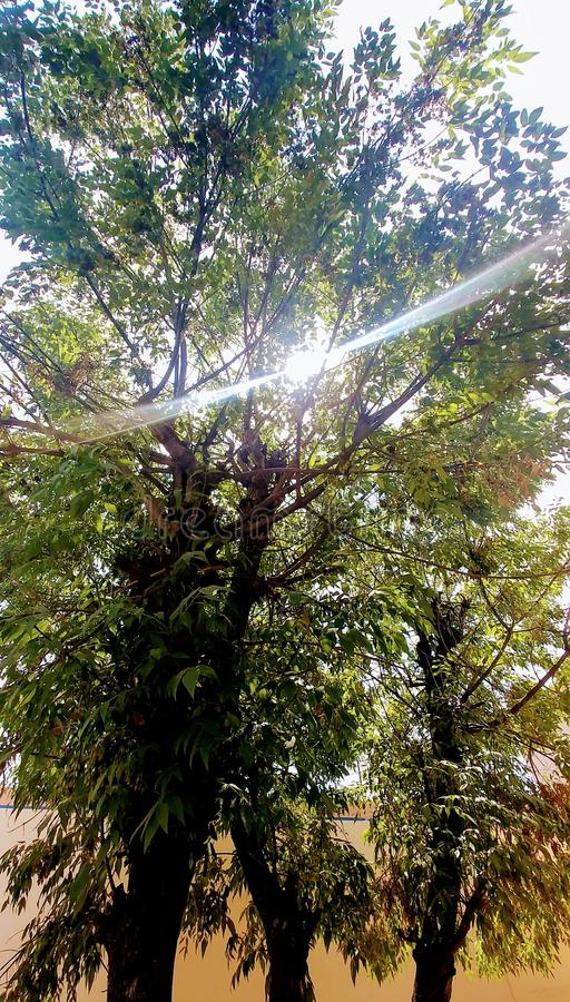 Luz da árvore foto de stock