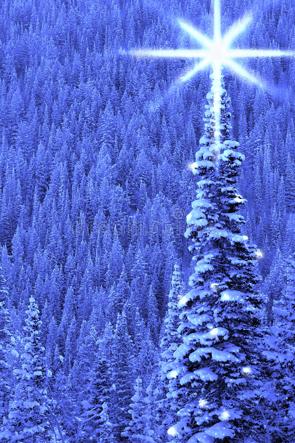 Luz da árvore de Natal fotos de stock
