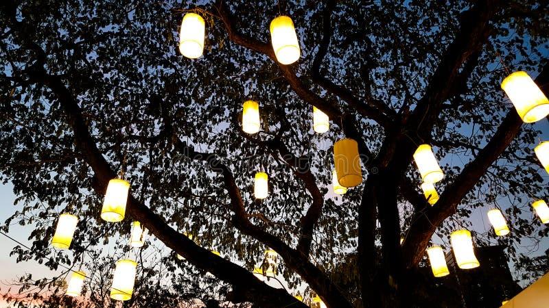 Luz da lanterna de papel que decora na árvore na noite imagens de stock royalty free