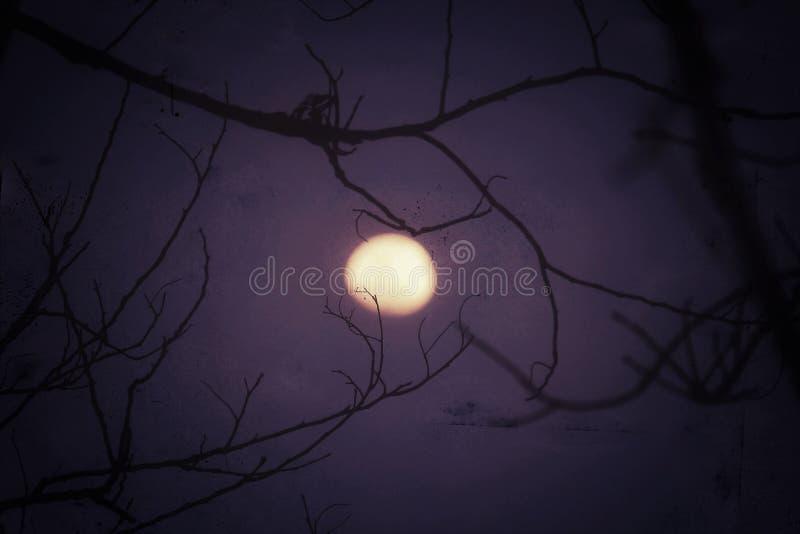 A luz da Lua cheia e de lua brilha sobre o céu vívido no crepúsculo fotos de stock