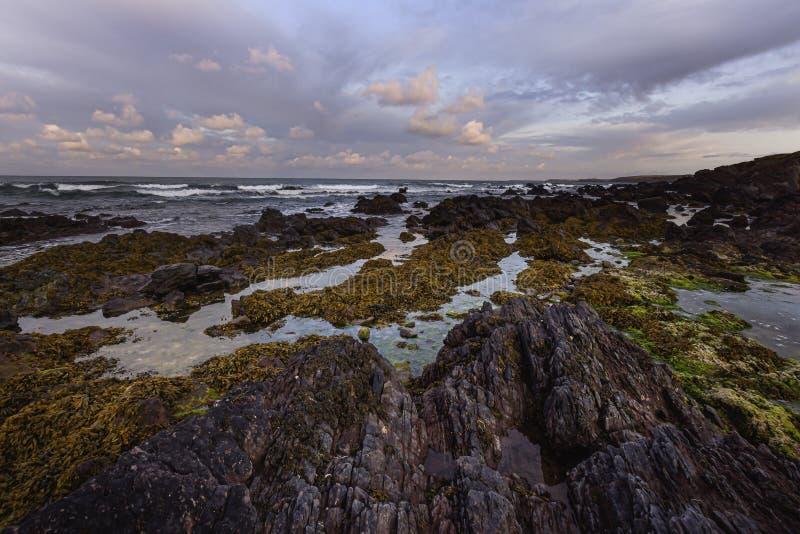 Luz da manhã linda na praia rochosa cênica durante a maré baixa em Freshwater West, Pembrokeshire, South Wales, UK foto de stock