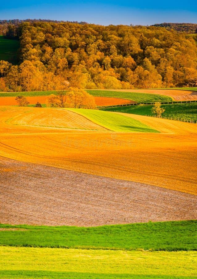 Luz da noite em campos de exploração agrícola no Condado de York rural, Pensilvânia imagem de stock
