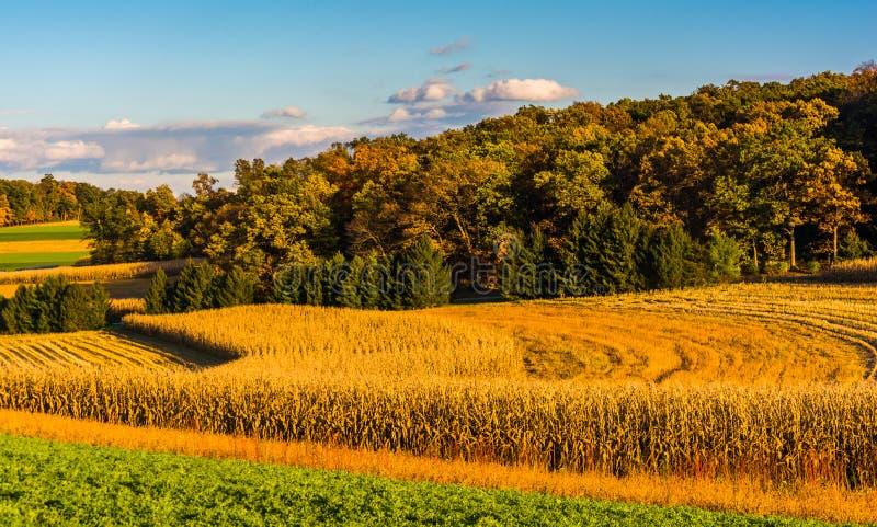 Luz da noite em campos de exploração agrícola no Condado de York rural, Pensilvânia imagens de stock royalty free