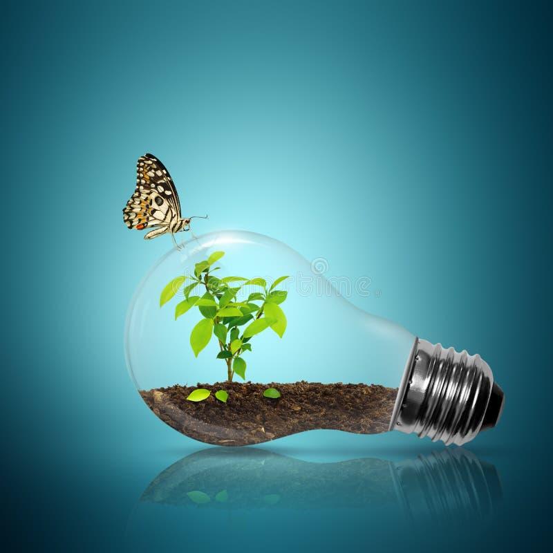 Luz de bulbo com interior e borboleta da árvore fotos de stock