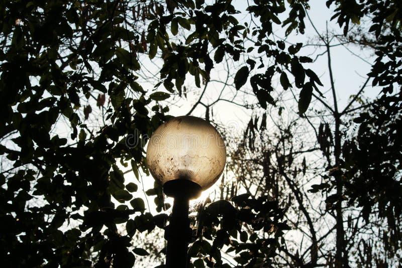Luz de calle foto de archivo libre de regalías