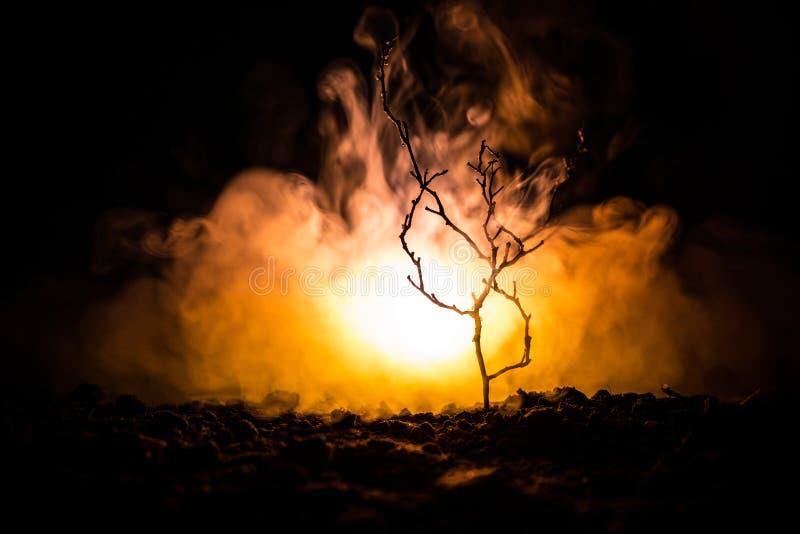luz de calle asustadiza de la noche en la niebla del árbol, ramas de árbol en un fondo de niebla del fuego Anaranjado oscuro ento fotografía de archivo libre de regalías