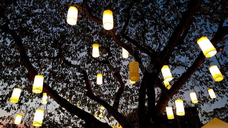 Luz de la linterna de papel que adorna en árbol en la noche imagen de archivo