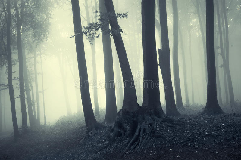 Luz de la mañana en un bosque brumoso fotografía de archivo