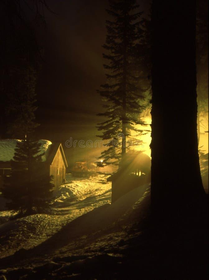 Luz de la noche en secoya foto de archivo libre de regalías