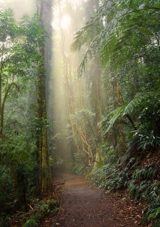 Luz de la selva tropical foto de archivo libre de regalías