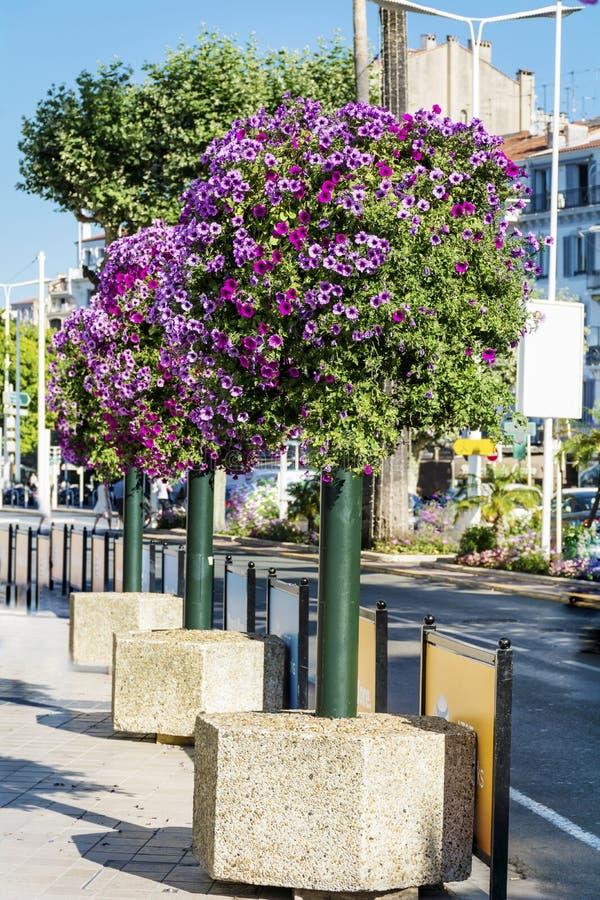 Luz de rua com as cestas de suspensão coloridas da flor do petúnia fotos de stock royalty free