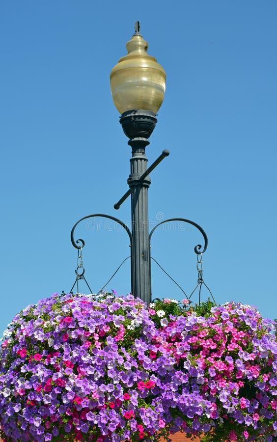 Luz de rua com as cestas de suspensão da flor do petúnia fotografia de stock