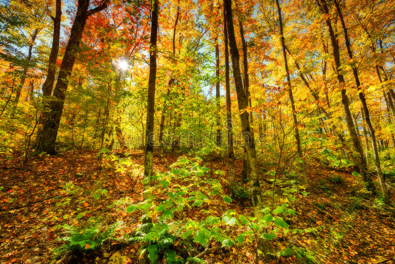 Luz de Sun em Autumn Forest fotografia de stock royalty free