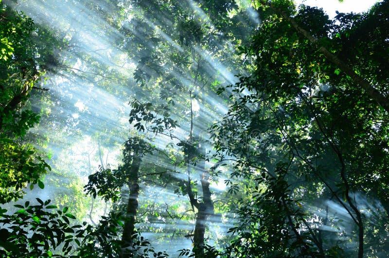 Luz de Sun na floresta foto de stock royalty free