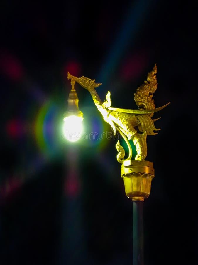 Luz del cisne de Gloden fotos de archivo libres de regalías