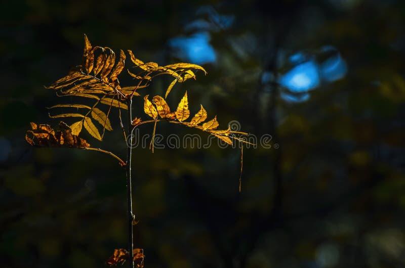 Luz del concepto de la esperanza: Las hojas que brillan intensamente en luz del sol en una fantasía misteriosa oscura Forest Autu fotos de archivo libres de regalías