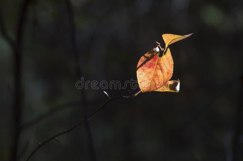 Luz del concepto de la esperanza: Las hojas que brillan intensamente en luz del sol en una fantasía misteriosa oscura Forest Autu fotografía de archivo libre de regalías