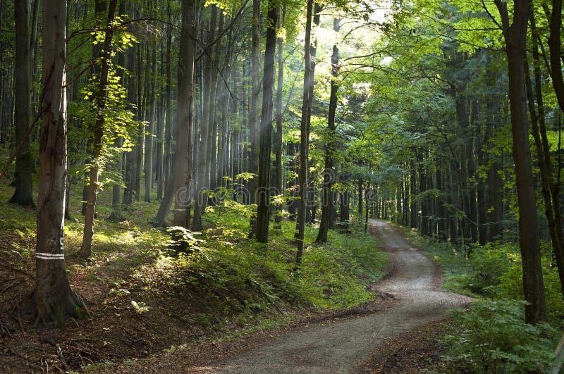 Luz del día del bosque de la naturaleza imágenes de archivo libres de regalías