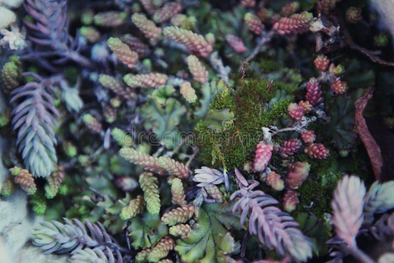 Luz del día del jardín de la primavera del cactus de los Succulents imagen de archivo libre de regalías